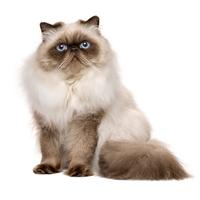 Red Cat Blueのアイコン画像
