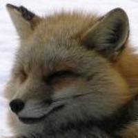 松下昌太郎  (Taro Fox)のアイコン