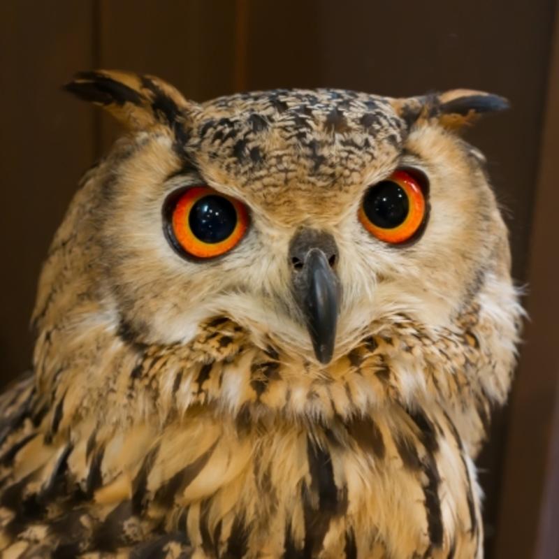 アイコン: Sound Owl