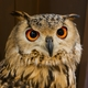 Sound Owlのアイコン画像