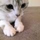 Mighty Catのアイコン画像