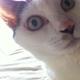 Mitama SORAのアイコン画像