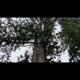 一本杉 洸紀のアイコン画像