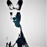 Kangaroo Musicのアイコン