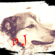 Doggie Jazzのアイコン画像