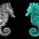 seahorseのアイコン画像