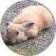 ピクシム(岩崎)のアイコン画像