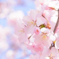 springのイメージ