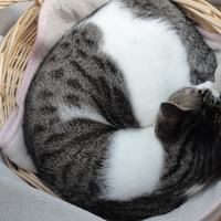 猫玉のアイコン画像