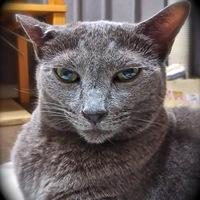 Kumaoのアイコン画像