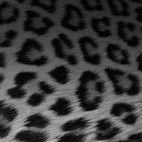 Leopardのアイコン画像