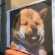 Lalaのアイコン画像