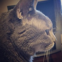 NIESUNのアイコン画像