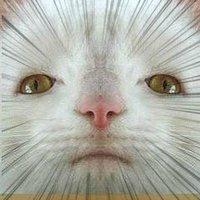 Ominaのアイコン画像