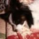 リューイッティのアイコン画像