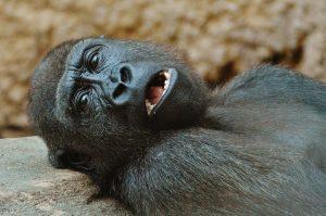 monkey-1346590_960_720