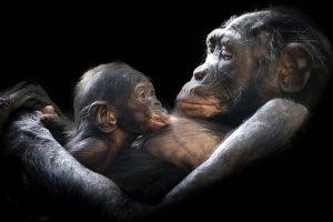 animals-1097143_960_720