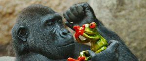 monkey-1359992_960_720