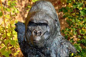 gorilla-272121_960_720