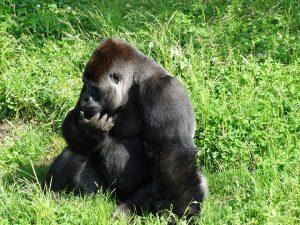 monkey-374452_960_720