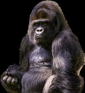 gorilla-1596803_960_720