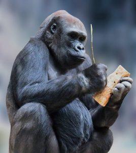 monkey-1334696_960_720