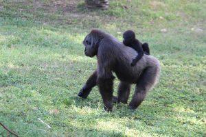monkeys-1150845_960_720