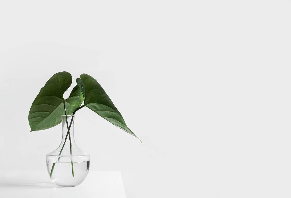花瓶に生けた葉