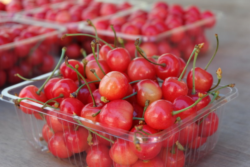 Cherries Picking 8