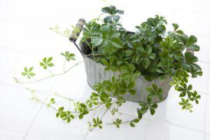 6 「観葉植物」