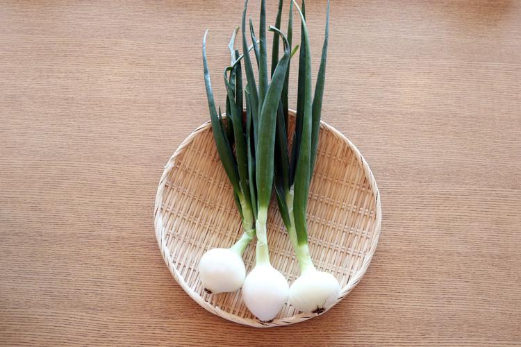「淡路ねぎたまちゃん」(「ベジバルーン2018年4月(卯月)草花咲きほこり春いろ野菜たち」より)