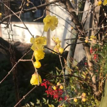 美しい黄色