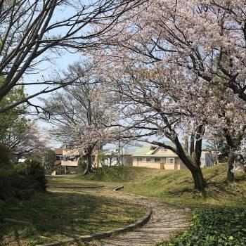 静岡県立美術館へ伊藤若冲の《樹花鳥獣図屏風》を観に。
