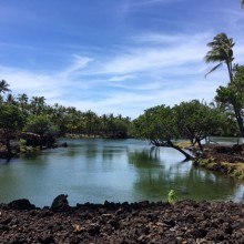 ハワイ島日記❺