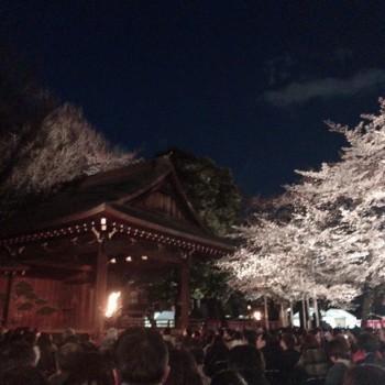 夜桜能2019