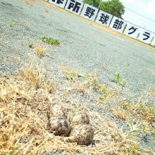 青島野球部秘密の宝物
