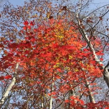 晩秋の尾瀬