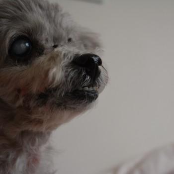 愛犬についてのご報告
