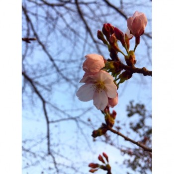 ❀ 花は咲く! ❀ flower