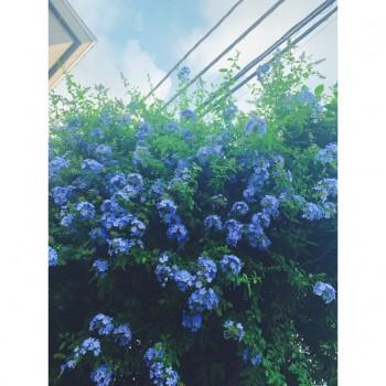 ❀ あと2日 ❀ Flower