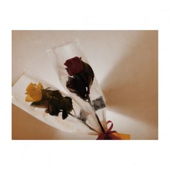 ❀ ニットーモール熊谷さん ❀ Flower