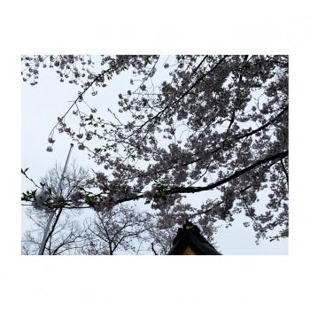 ❀ 初顔合わせ ❀ Flower