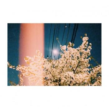 ❀ クリエイティブでエンターテインメント ❀ Flower