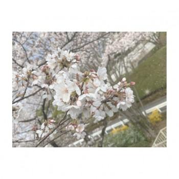 ❀ 大切なおしらせ ❀ Flower