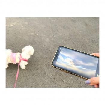 ❀ 北日本放送 KNBラジオさん「でるラジ」❀ Flower