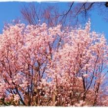 ☆hello, April☆