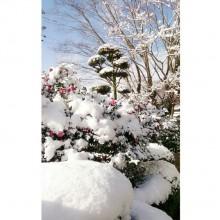 ☆初雪とぱりす~♪☆
