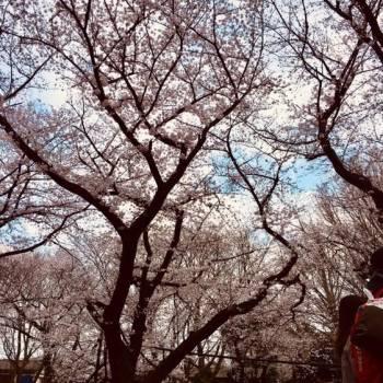 お花見第1弾(^^)
