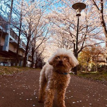 桜とこえつさん🌸