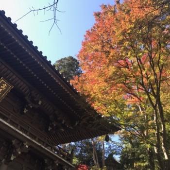 高尾山の紅葉🍁